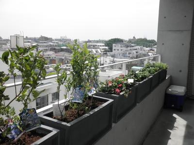 テラス菜園.JPG